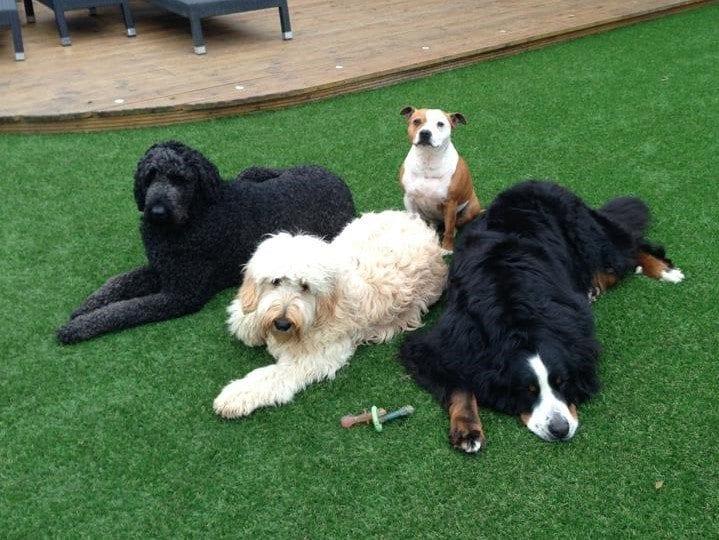Dog family on grass