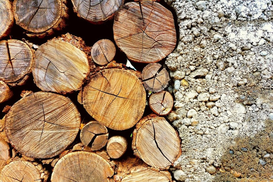 bark close up concrete 737601