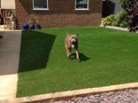 dog safe artificial grass garden