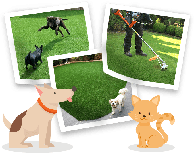 Interested in Having Your Lawn Professionally Cleaned?