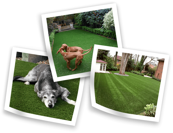 Why Is Artificial Grass Suited to Dogs and Pets?