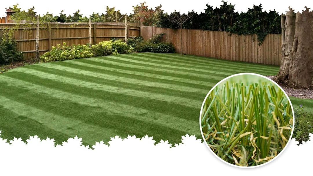 Find out everything you need to know about Trulawn Regal artificial grass