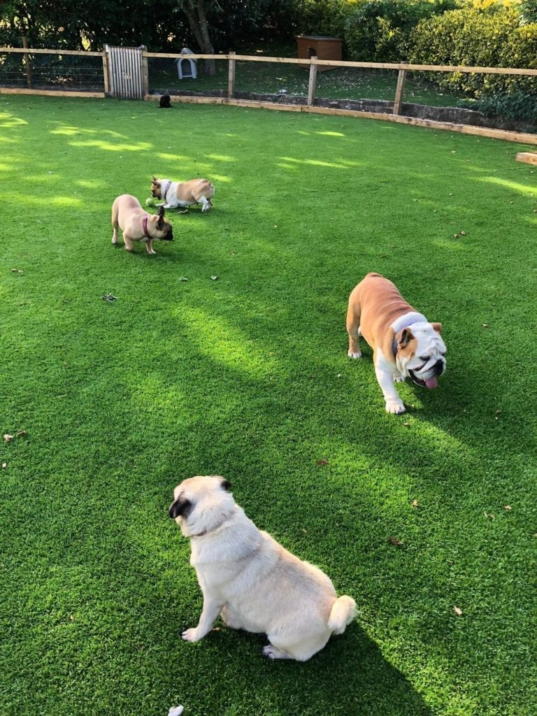 Lawn Revive grass installation