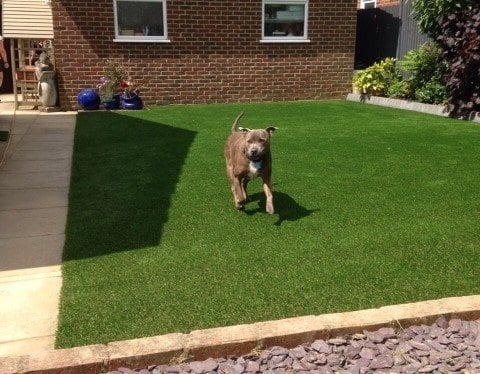 5 Things To Know About Fake Grass For Pets