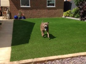 Making the Most of Your Grass