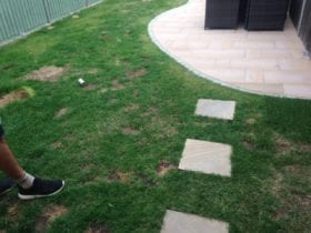 No More Patchy Grass
