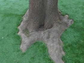 Putting fake grass around trees