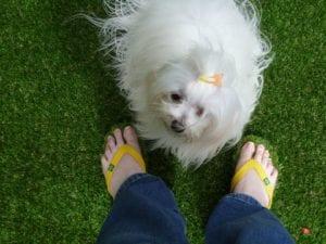 Trulawn Grassy Flip-Flops