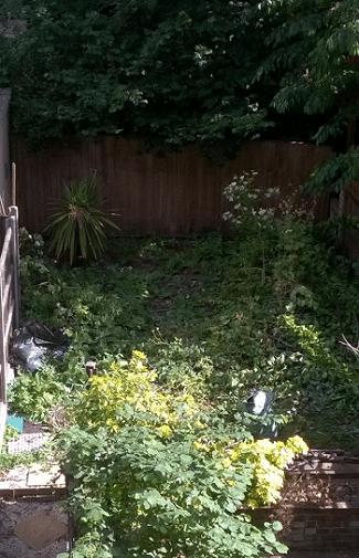 West Hampstead Jungle