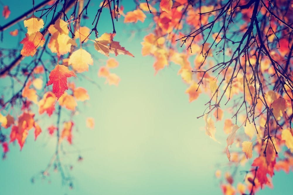 8 Reasons You Should Install Your Lawn in Autumn