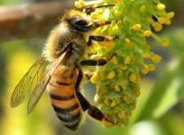 Get your garden buzzing this spring