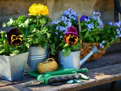 10 Things to do in the garden this Spring