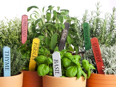 5 reasons why you should start a herb garden
