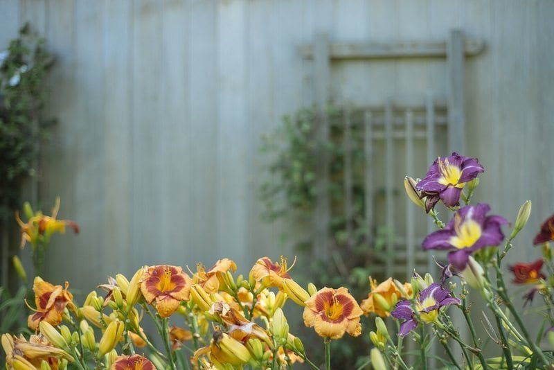 Where's the best place to get inspiration for your garden this summer?