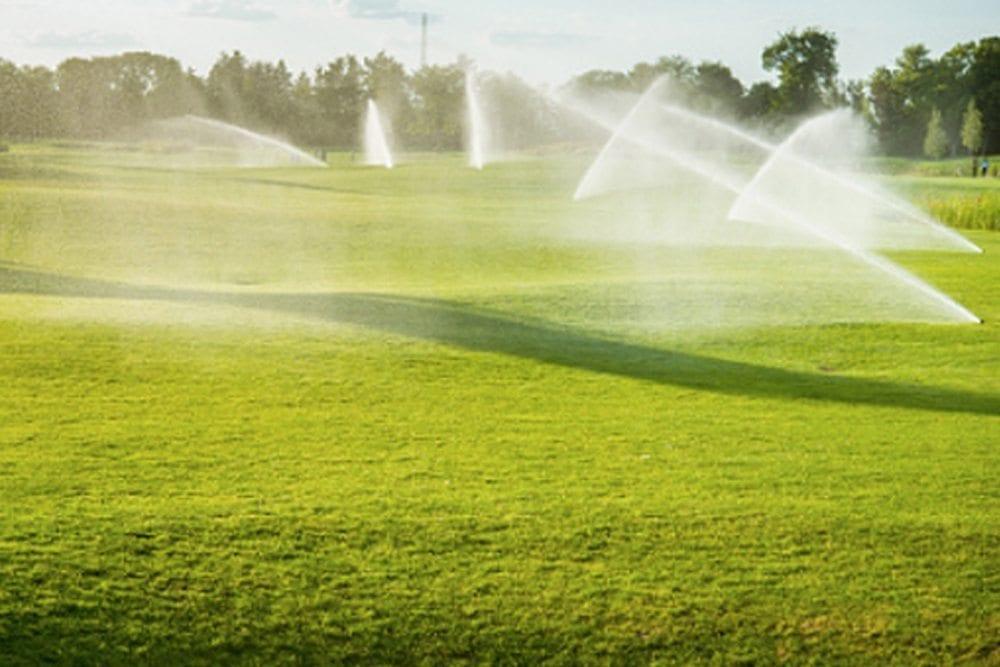 No watering